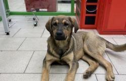 Собака даром в Пскове - объявление №614257