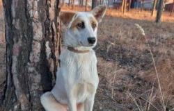 Собака в добрые руки в Улан-Удэ - объявление №616520