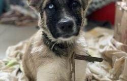 Собака в добрые руки в Петропавловске-Камчатском - объявление №616744