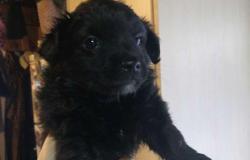 Собака в добрые руки щенок в Елизово - объявление №617408