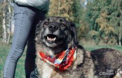Взрослая собака Карамелька в хорошие руки в Раменском - объявление №617926