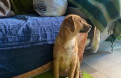 И бесплатно щенок в Краснодаре - объявление №618164